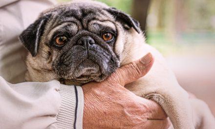 Jak żyć ze starszym psem?