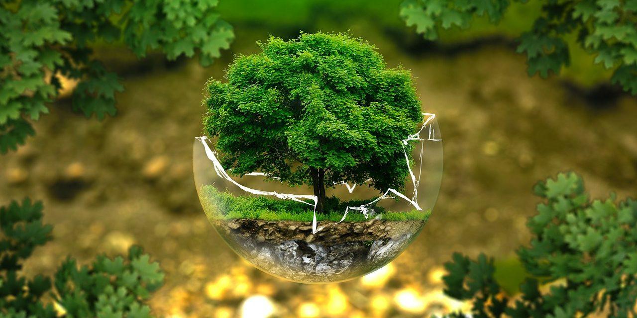Ekologia i zdrowie w Twoim domu