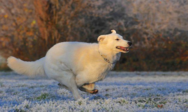 Jak dbać o zwierze zimą?