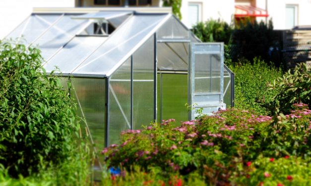 Przydomowa szklarnia ogrodowa: czy warto?